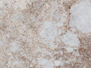 Excava 4046 Caesarstone001_Granit.in.ua